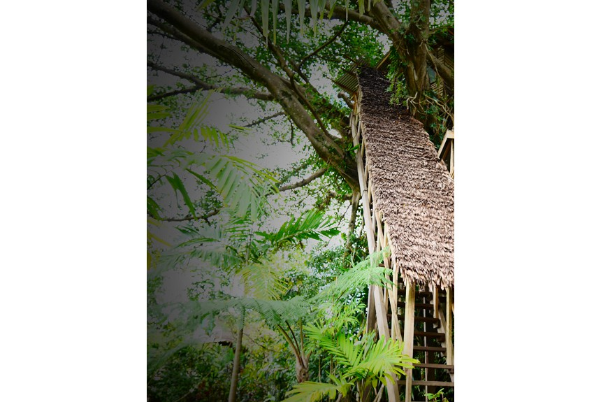 Tanna tree top lodge - Property Photo